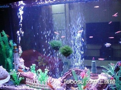 常见风水鱼有哪些?如何选择风水鱼?