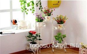 室内花架图片
