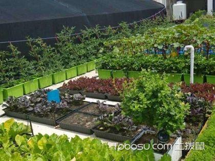 屋顶农场的好处和铺设时的注意事项