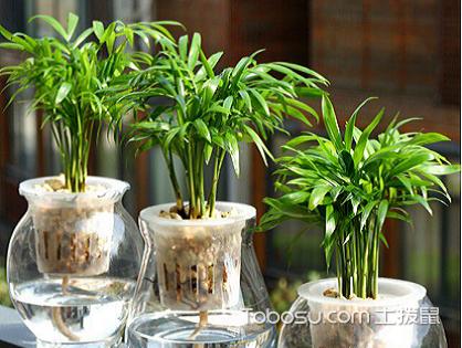 除了袖珍椰子,哪些植物還適宜放室內?