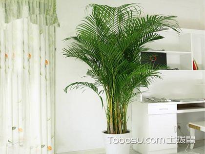 凤尾竹和散尾葵哪个好,凤尾竹和散尾葵有什么区别