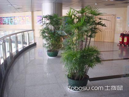 如何能够使盆栽植物很好的搭配客厅呢?客厅植物怎么摆放?