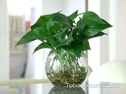 哪些家居花卉植物最吸收有害气体?