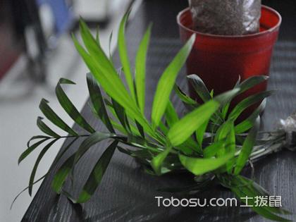 客厅适合什么植物最好呢?这四种植物你肯定都见过