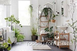 家居绿植布置