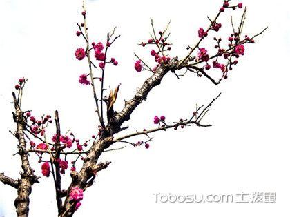春季开花的植物有哪些?阳台春季养花要注意什么?