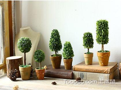 客厅盆栽植物 客厅放什么盆栽好