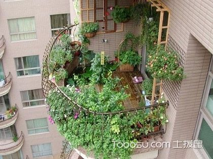 阳台放什么植物风水好,看一看就知道了
