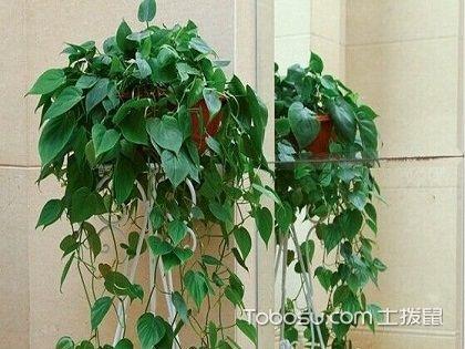 什么植物除甲醛最好,这几样最好用