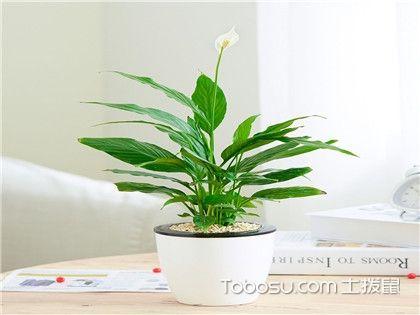 一帆風順的養殖方法和注意事項,愛養花的你絕對不要再錯過了!