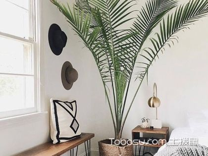 散尾葵适合放客厅吗,客厅里放散尾葵好吗