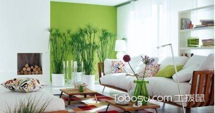 客厅植物摆放风水禁忌和原则技巧