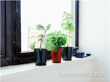 家居绿植风水禁忌,赶紧看看你家的绿植摆对了吗?