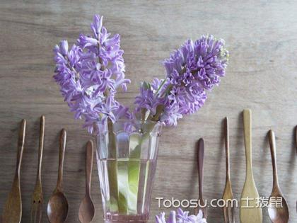 風信子的養殖方法介紹,助你養出最美的風信子