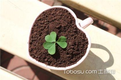 三叶草怎么种,三叶草的种植方法