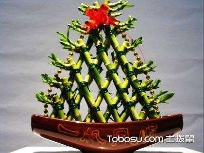 怎样养富贵竹才能养好?富贵竹叶子发黄怎么办?