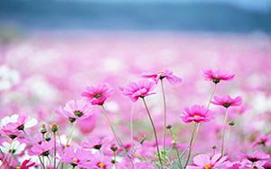 【花卉】花卉盆景,花卉养殖方法,图片,树木