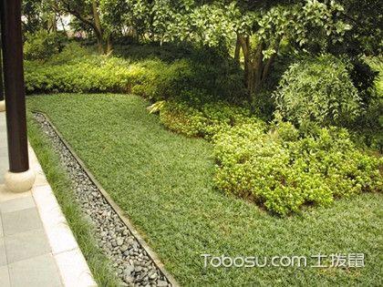 庭院种植大树风水禁忌,庭院为什么不能种植大树