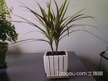 【办公室盆栽植物】适合办公室内10大盆栽植物