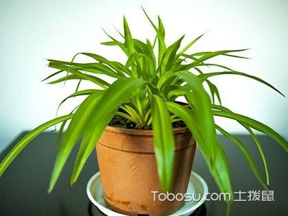 新房装修除味植物有哪些?除味植物总结