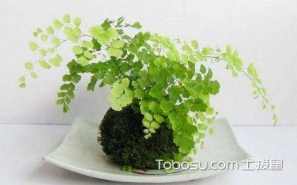 家里养什么植物风水好?家里养植物推荐介绍