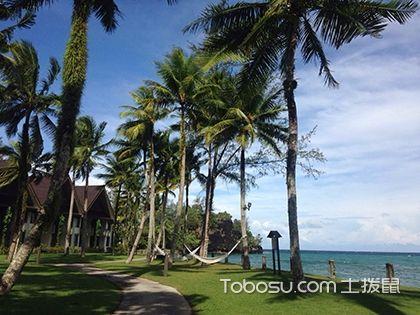 棕榈树的特点 棕榈树的作用 棕榈树和椰子树的区别