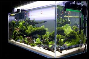 客廳魚缸造景