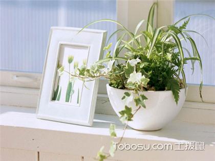 适合家养的植物有哪些?四种清除油烟和粉尘的室内植物