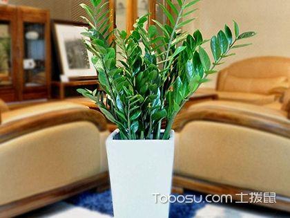 如何正确选择阳台植物?阳台风水植物怎么选?
