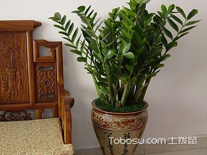 阳台种植哪些植物好?阳台植物有哪些风水讲究?