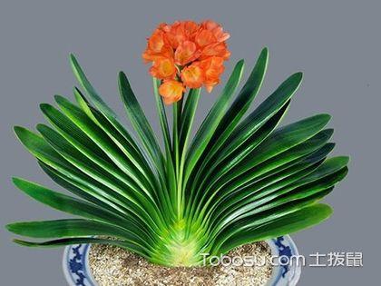 什么植物有利于客厅风水?家居风水植物摆设方位