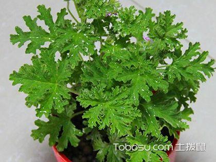 卫生间植物风水,卫生间适合放什么植物?