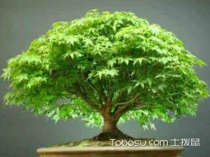 哪些植物利于家居風水?家居風水植物怎么選擇?