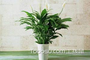 客厅家居植物