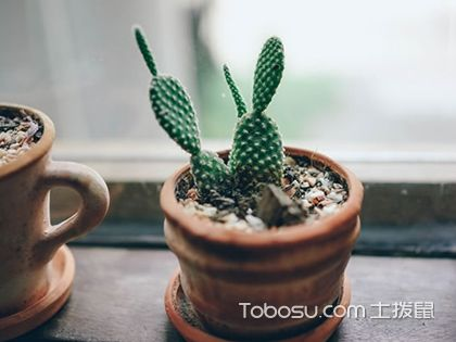 净化空气最好的家养花草植物,想购买植物的朋友赶紧看看