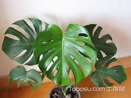 室內養什么植物好?室內植物大全