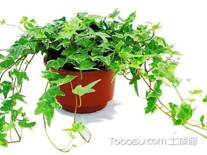适合客厅的植物,客厅可摆放这些植物