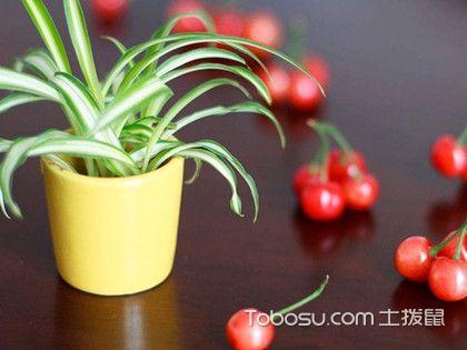 新装修的房子放什么植物好?装修完放什么植物