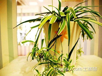 客厅放什么植物好?客厅植物摆放位置