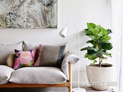 客厅植物摆放风水,客厅植物风水介绍