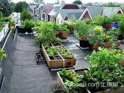 庭院种菜设计寓农于情,雅致至极