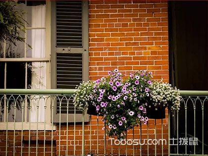 阳台上摆放哪些植物可旺财 阳台旺风水的植物摆放