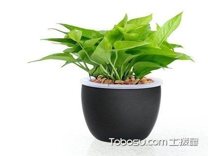 办公室放什么植物好?办公室摆放植物介绍
