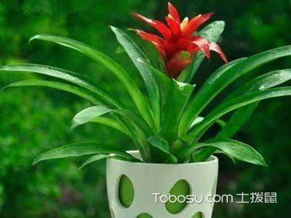 哪些植物利于家居风水?家居风水植物摆放讲究