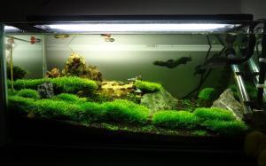 【鱼缸水族箱】鱼缸水族箱简介、价格及生态鱼缸水族箱