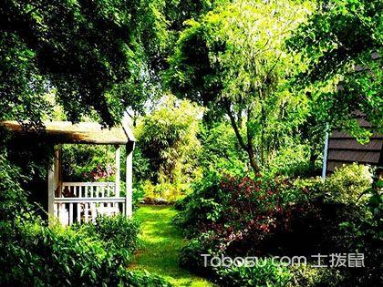 庭院植物如何选择,庭院植物寓意介绍