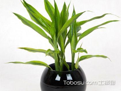家里养甚么植物风水好?哪些植物可以招财旺财?