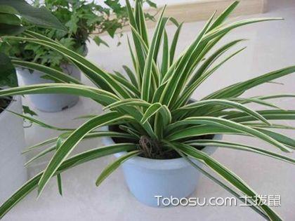 适合卧室摆放的植物有哪些,卧室植物摆放风水禁忌