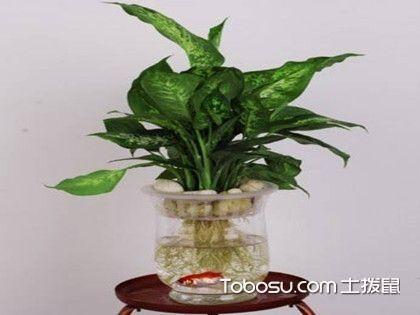 水培植物怎么养?水培植去养殖方法介绍