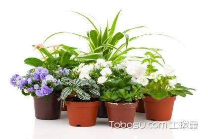 喜陰的室內植物有哪些?室內植物種類介紹